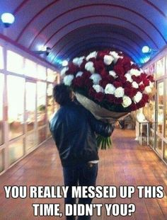 18 Best Flower Meme S Images Funny Animals Funny Images Adorable