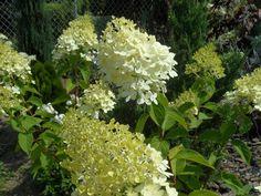 10 pięknych roślin, które warto mieć w ogrodzie Flora, Plants, Gardening, Decor, Living Room, Decoration, Lawn And Garden, Plant, Decorating