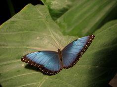 Butterfly Zoo Antwerpen