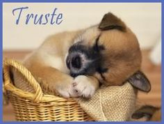 These adorable baby animal pictures are guaranteed to put a smile on your face. Cute cat photos, wonderful dog images and other cute baby animals. Baby Animals Pictures, Puppy Pictures, Cute Baby Animals, Funny Animals, Animal Pics, Animal Quotes, Animals Images, Nature Animals, Adorable Pictures
