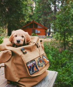 I got the Golden Retriever pup, got the mountains, and the time…PATCHES where we go! I got the Golden Retriever pup, got the mountains, and the time…PATCHES where we go! Cute Baby Animals, Animals And Pets, Funny Animals, Cute Puppies, Cute Dogs, Dogs And Puppies, Doggies, Cute Puppy Pics, Funny Dogs
