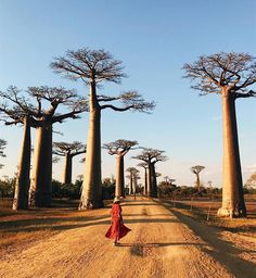 @karlatomaselli is Not Lost  in Madagascar.