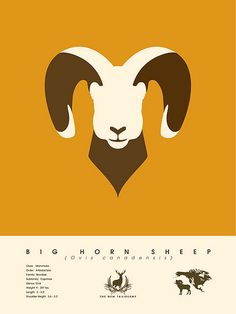 big horn sheep #design #vector #horns