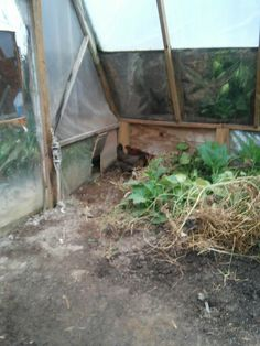 Chickens in attached to Coop Greenhouse