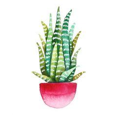 кактусы, цветы