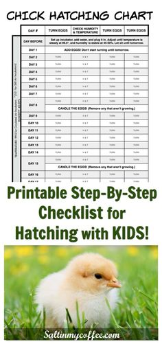 Hatching with kids is so much fun! This printable chart makes it easy to keep track of turning the eggs, keeping the correct humidity and temperature, and remembering when to candle, as you count down to hatch day!