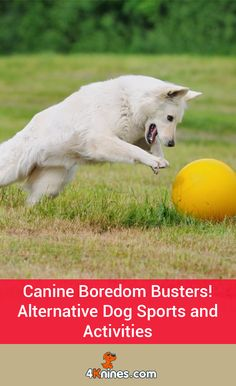 While some dogs love the challenge of agility or rally or other organized dog sports, these sports are not good for all dogs. If you're looking for options, here are fun alternative dog sports and activities for you and your pup to do this summer. Read more here!
