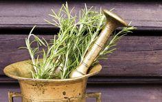 A rozmaring az egyik legnépszerűbb fűszernövény, melynek gyógyító hatásairól már a középkorban is több feljegyzés született. A néphagyomány pedig a szerelem növényének tartja, mely a vitalitást is növeli. Lássuk, miért érdemes mindennap beilleszteni az étrendünkbe! A