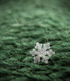 On certain snowfalls you can truly see actual, individual snowflakes! Snowflake Photos, Real Snowflakes, Love Natural, Snow And Ice, Fine Art Photography, Macro Photography, Photo Tree, Winter Fun, Winter Landscape