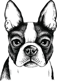 Boston Terrier Face Clipart vectoriel 186410618 | Thinkstock