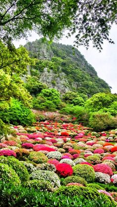 azaleas in the rain Mifuneyama Rakuen :Takeo city in Saga prefecture, Japan Japan Places To Visit, Cool Places To Visit, Beautiful Flowers Garden, Love Flowers, Beautiful World, Beautiful Places, Amazing Places On Earth, Autumn Scenery, Flower Photos