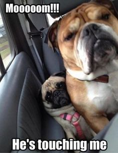 Mom pls help. HE'S BREATHING MY AIR!!! Are we there yet? I need to go.....  {:-)