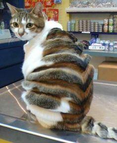 funny fat cat - Hledat Googlem