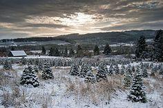 Local Christmas Tree Farms: A Lens Into Environmental Science