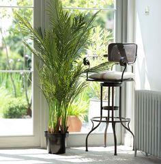 Faux Plants, Tropical Plants, Artificial Plants, Plant Decor, Home Accents, Palm Trees, Bar Stools, Home Accessories, Living Room