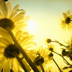 Summer Summer Summer !    Here comes the sun by ZedZap, via Flickr