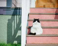.a really nice photo taken of the black & white kitty in contrast to the colors of the house.