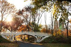 Fall on Central Park West~   Ann Street Studio