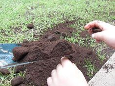 Using coffee grounds really helps? If yes, what are the correct ways to use 'Coffee grounds for gardening'? Read all about coffee grounds in this educative article