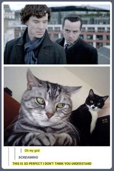 Funny pictures about Sherlock Cats. Oh, and cool pics about Sherlock Cats. Also, Sherlock Cats photos. Sherlock Fandom, Sherlock Holmes, Sherlock Quotes, Funny Sherlock, Jim Moriarty, Sherlock Season, Watson Sherlock, Sherlock John, Sherlock Poster