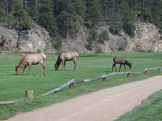 The deer and elk will walk by your door every day. At acres, there is plenty of room for them to stop and stay awhile. Please visit us at www.OhtamaAtEvergreen for more information. Walking By, Elk, Acre, Moose Art, Room, Animals, Moose, Bedroom, Animales