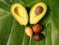 Avocadokern - corazón del aguacate