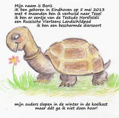Boris Boekje : Boris de landschildpad