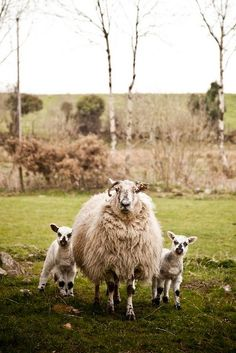 Fluffy mama and her twins