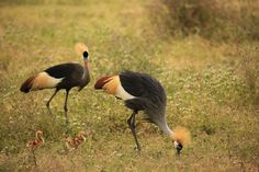 JACEK PAWLICKI PICTURES: Tanzania, Ngorongoro, June 2017