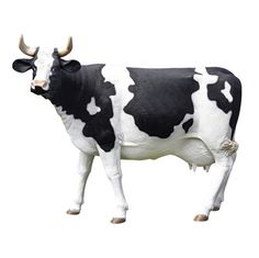 The Grand-Scale Wildlife Animal Collection: Holstein Cow Statue: This large-scale, display-quality sculpture transforms any home, garden, restaurant or hotel into something truly magnificent!