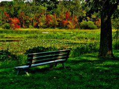 Lilly Pond by Kathleen Mendel
