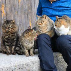 aoshima_cat 今年も残りわずかとなりました。 皆さまからの猫たちのご飯や子猫用のパウチ等は1月末分まで備蓄されています。 皆さまのご支援ありがとうございました。 猫たちはのんびりとしたお正月を迎えることができます。 また来年もInstagramを通じて青島の情報を発信していきますので、よろしくお願い致します。  Thank you for the support of cats' food. Aoshima's cats also can relax and have New Year. Thank you also next year.  #cats #aoshima #aoisland #catisland #青島 #猫島  2017/12/31 21:17:34