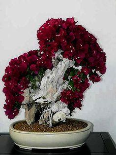 Apenas ame este árbol bonito de los bonsai.