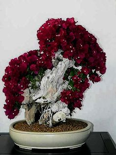 ♦ᴥI just love this pretty #bonsai tree.☼♥       #BonsaiInspiration