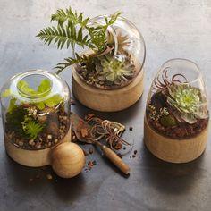 Glass Terrariums + Wood Base