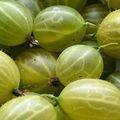 Ez az apró gyümölcs a világ egyik legerősebb antioxidánsa, 20x annyi C-vitaminnal, mint amennyi a narancsban van
