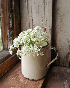 #luonnonkukat #luonnonkukkia #summerflowers #kesäkukkia #kukkia #fiore…