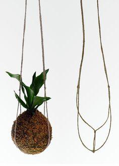 Unique Hanging Kokedama Ball Ideas for Hanging Garden Plants selber machen ball Moss Garden, Garden Plants, House Plants, Ikebana, Air Plants, Indoor Plants, Indoor Garden, Outdoor Gardens, Art Floral Japonais