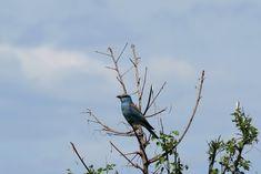 Partizani, Delta Dunării: Culori... Danube Delta, Bird, Animals, Animaux, Birds, Animal, Animales, Animais