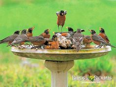 bird baths and feeders along with the right flowers will bring a big reward