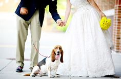 Do or Don't: Dogs in Weddings Too cute!<br> I know you guys love dogs (look at their cute faces!) but how do you feel about dogs in weddings? Take a look. Dog Wedding, Green Wedding, Wedding Day, Wedding Stuff, Wedding Dreams, Wedding Ceremony, Wedding Photography Inspiration, Wedding Inspiration, Photography Ideas
