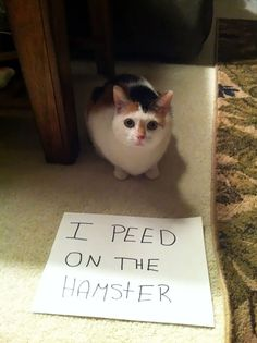 Peed On The Hamster | Here Are 25 Of The Worst Cats In The World