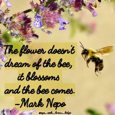 "The flower does not dream of the bee, it blossoms and the bee comes. Once you ""blossom"" everything that is meant for you will come into yoir life, just as the bee to the flower. Always be yourself and you'll spend the rest of your days much happier.  #knowledge #eye_seek_know_ledge #quoteoftheday #quotestoliveby #quotes #instaquotes #wordsmith #wordporn #poet #wisewords #wisdom #knowledgeispower #positivity #positivelife #positivequotes #knowledgequotes #goodvibes #spreadgoodvibes #iloveyou…"