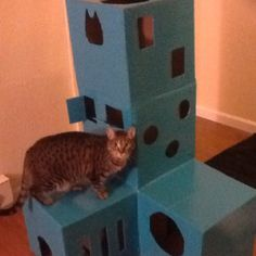 Cardboard box and duct tape cat playhouse. :)