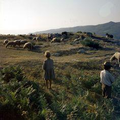 Cenas da vida Rural. Décadas de 60/80.
