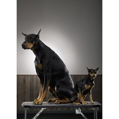 Doberman Pinscher  Dobermans are working dogs and thrive on training and exercise. Because of their intellect and sense of smell, Doberman Pinschers are frequently used by police department personnel to sniff out criminal suspects.
