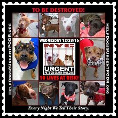 TO BE DESTROYED 12/28/16 - - Info  Please Share: To rescue a Death Row Dog, Please read this:http://information.urgentpodr.org/adoption-info-and-list-of-rescues/  To view the full album, please click here:http://nycdogs.urgentpodr.org/tbd-dogs-page/ -  Click for info & Current Status: http://nycdogs.urgentpodr.org/to-be-destroyed-4915/