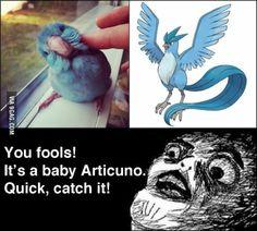You fools its Articuno! #pokemon