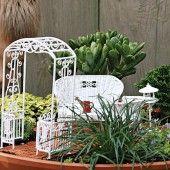 How to Grow a Miniature Garden