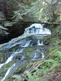 Ludlow Falls, near Hood Canal, Olympic Peninsula Waterfall Trail Hood Canal Washington, Washington State, Beautiful Places To Visit, Places To See, Port Ludlow, Olympic National Forest, Waterfall Trail, Camping For Beginners, Camping World
